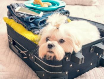 السفر مع حيوانات أليفة